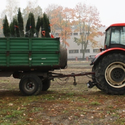 W Gliwicach będzie jeszcze więcej zieleni
